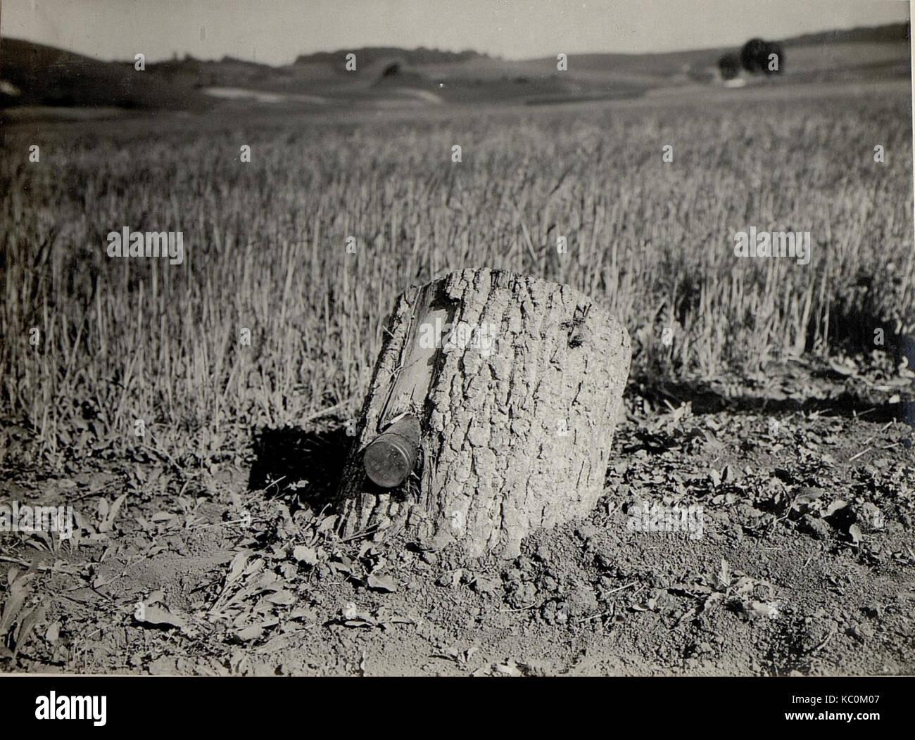 8cm Granate im Baumstamme (BildID 15529318) Stock Photo