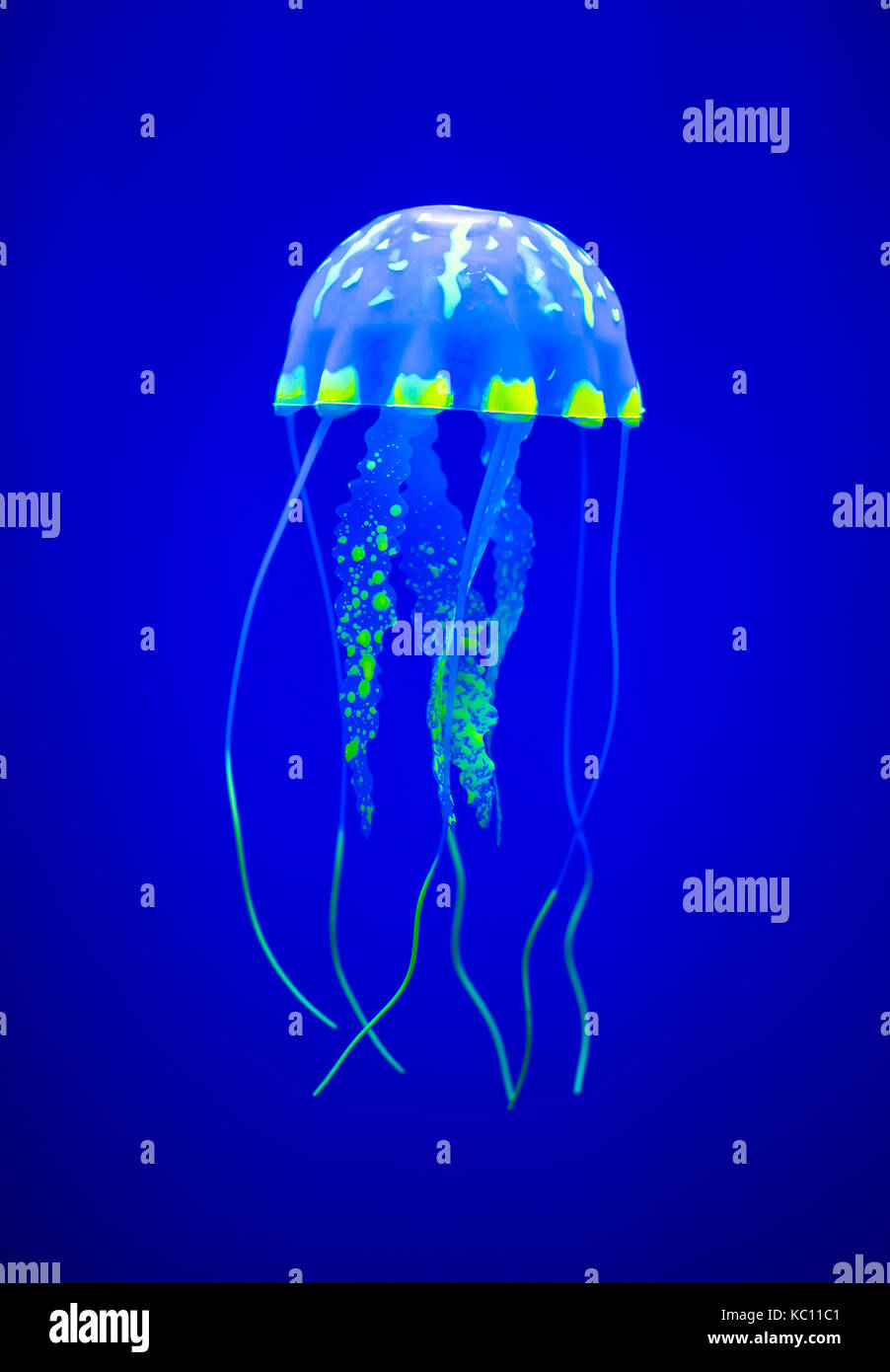 Real jellyfish on a blue background - Stock Image