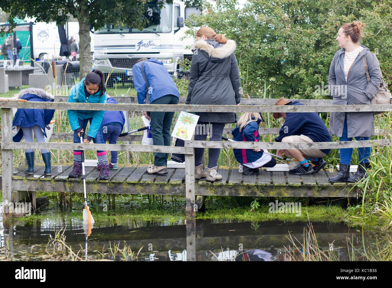 children catching frogspawn with nets in a pond - Stock Image