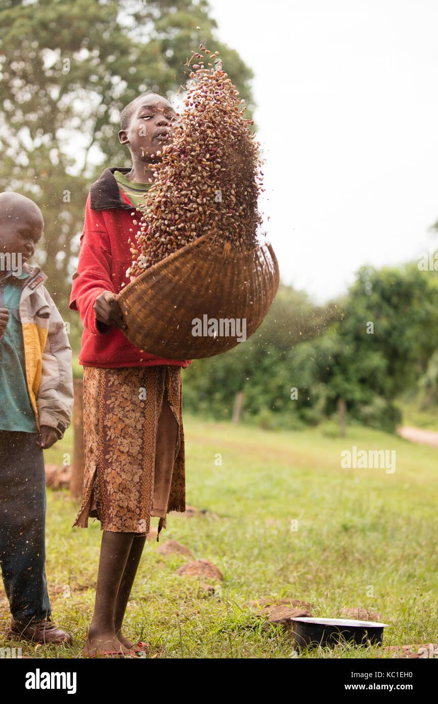 Girl winnowing beans, Kenya Stock Photo