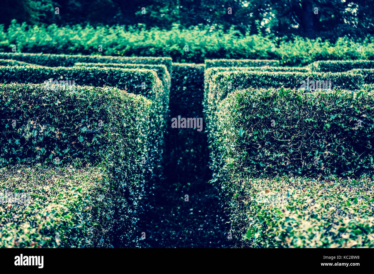 Entering a hedge maze in the Scottish highlands. - Stock Image