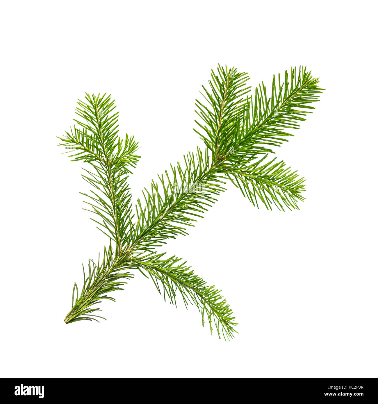 Fir or Spruce Branch Isolated on White - Stock Image