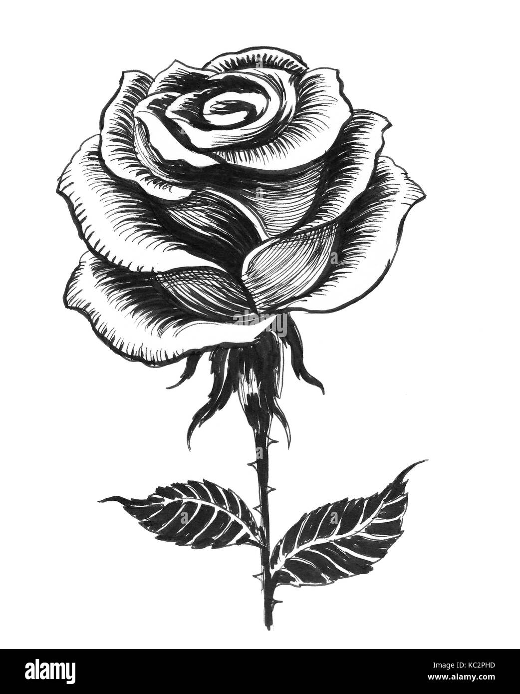 Ink Black And White Drawing Of A Single White Rose Stock Photo