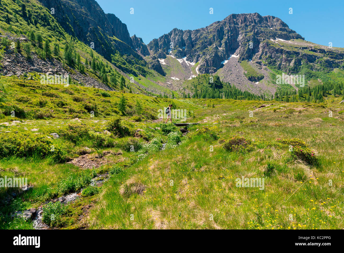 Italy, Trentino Alto Adige, San Pellegrino pass, Hiker on his way to the Cimon di Bocche peack along the trial n.628 Stock Photo