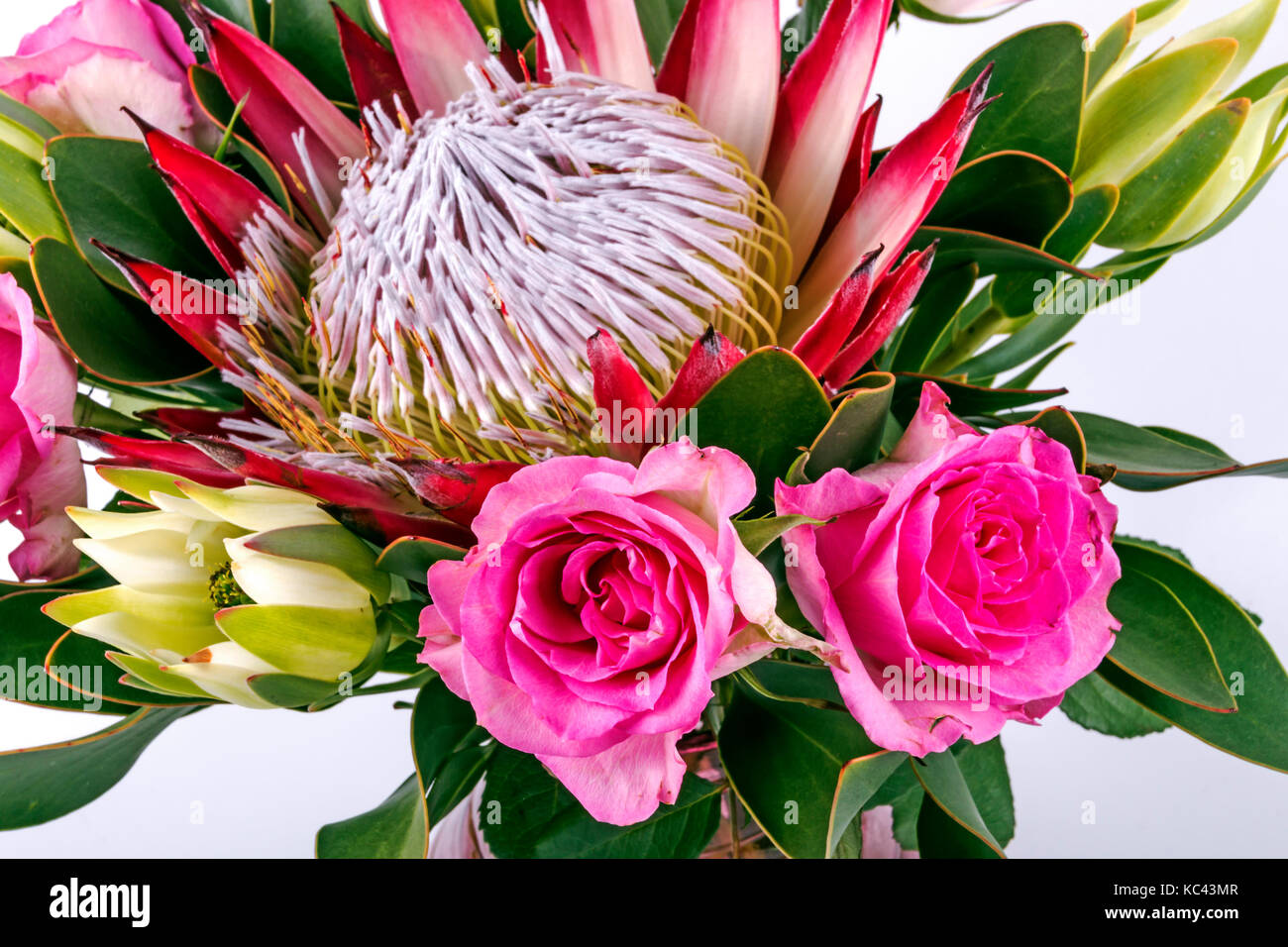 Protea Flower Arrangement High Resolution Stock Photography And Images Alamy