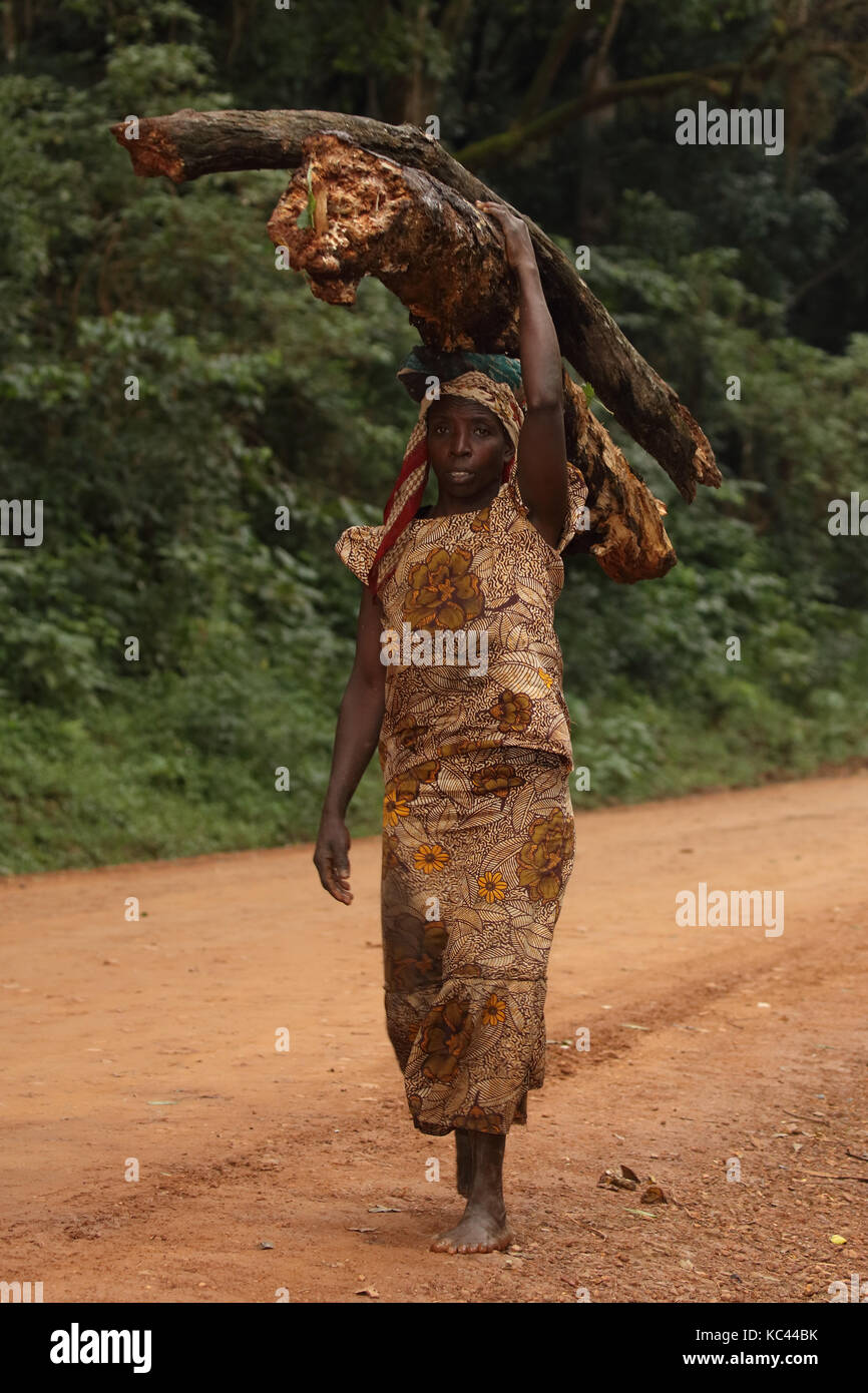 Luhya woman carrying firewood, Kakamega forest, Kenya, Africa - Stock Image