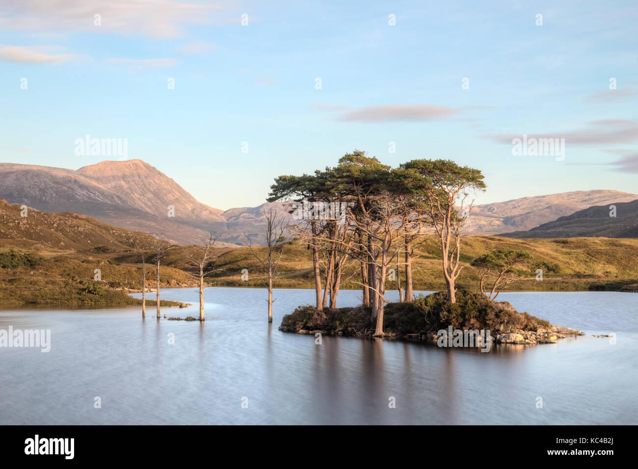 trees submerged at Loch Assynt, Sutherland, Scotland, United Kingdom - Stock Image
