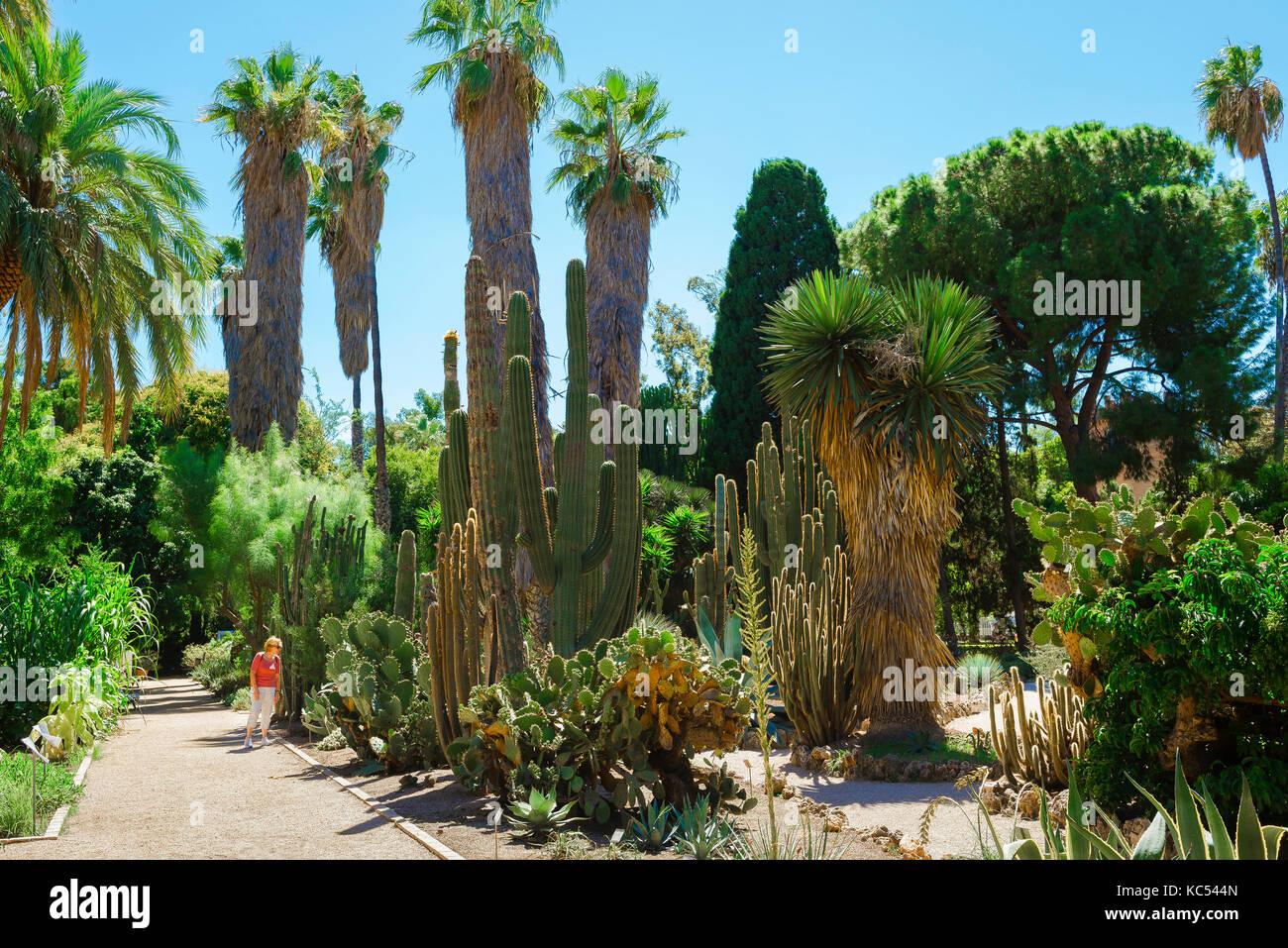 Cactus valencia spain stock photos cactus valencia spain - Jardin botanico valencia ...