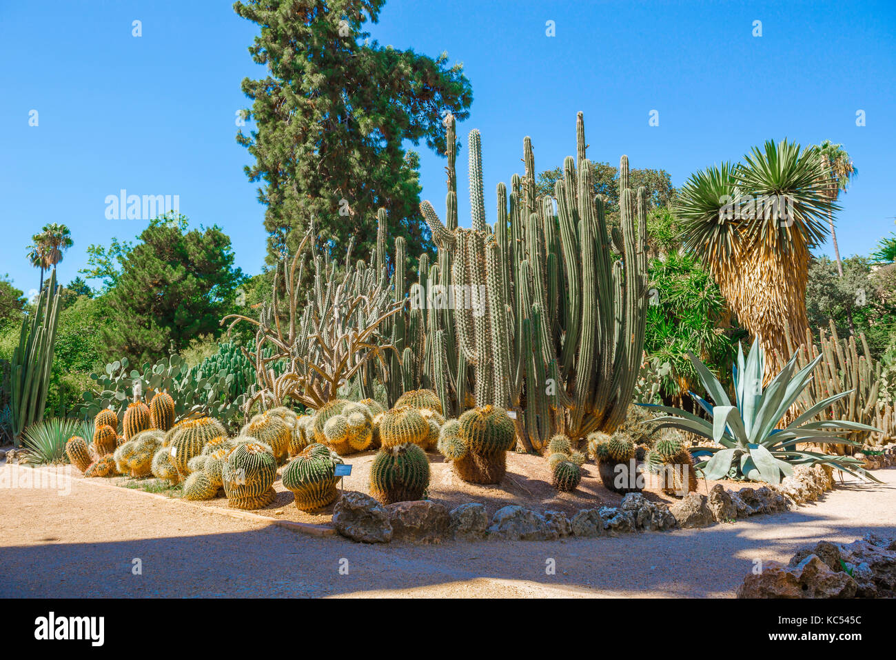 Valencia Spain Botanical Garden, View Of Mature Cacti In A Part Of The  Desert Plants Section Of The Jardin Botanico In Valencia.