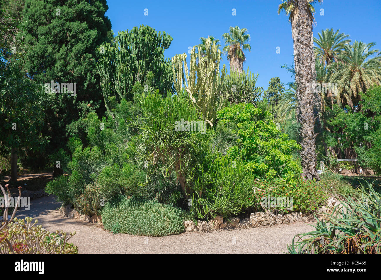 Nice Valencia Spain Botanical Garden, View Of Mature Cacti In A Part Of Stock  Photo: 162382253   Alamy