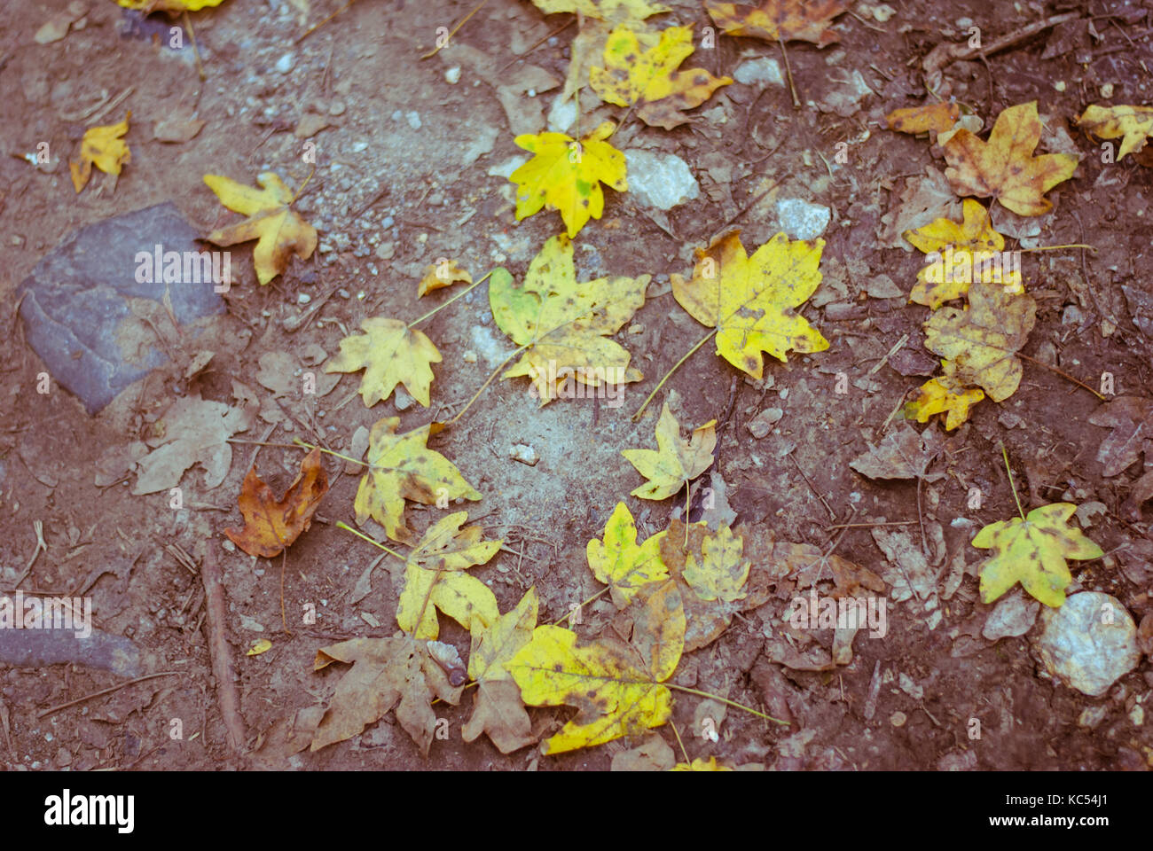Autumn leaves fallen on the ground, autumn city park - Stock Image