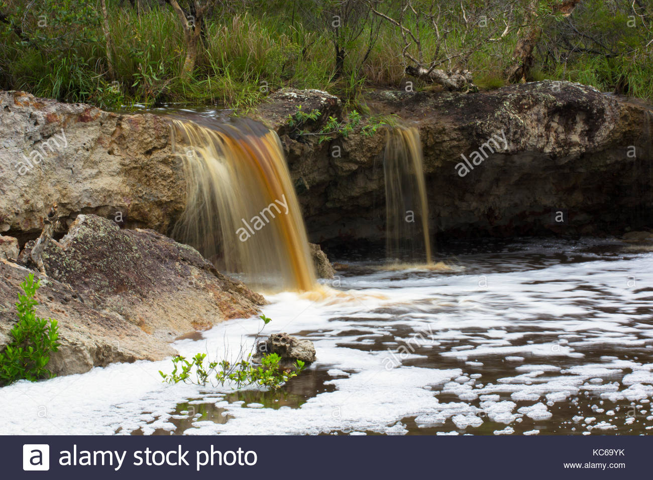 The tea coloured water from a tea tree forest flows over Coonarr Falls into  a mangrove creek in Queensland's - Stock Image
