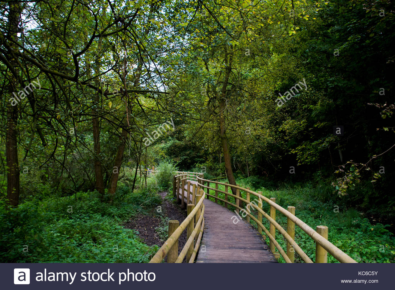 Wepre park, North Wales - Stock Image