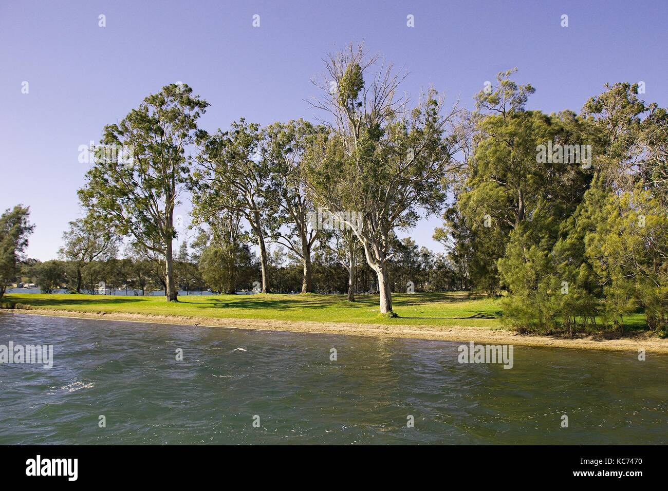 Rathmines Park Landscape with a tree studed horizon over water. Photographed at Lake Macquarie,  Australia. - Stock Image