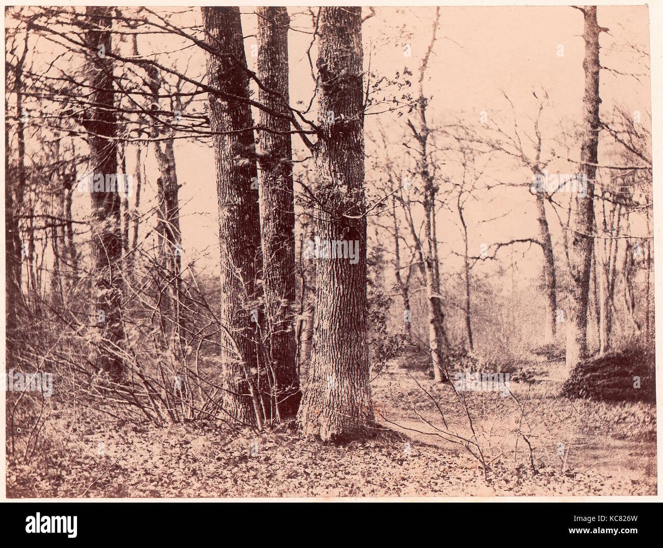 Sous-bois en automne, 1850–53, Salted paper print (Blanquart-Évrard process) from paper negative, Photographs, - Stock Image