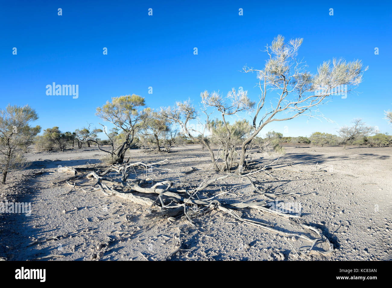 Drought in the Outback near Winton, Central West Queensland, QLD, Australia - Stock Image