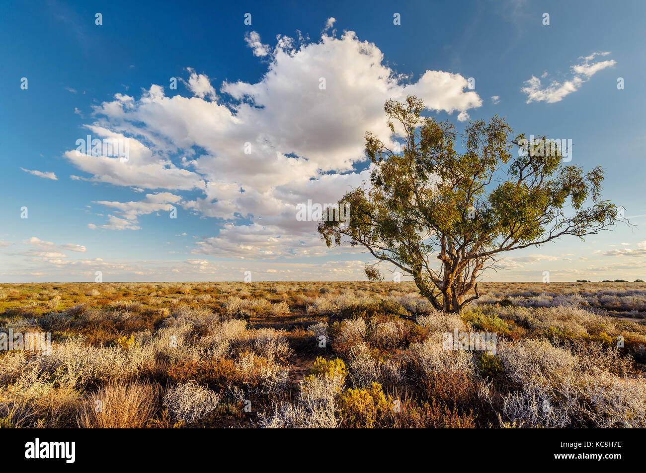 Lonely tree in the remote outback of Willandra Plains. - Stock Image