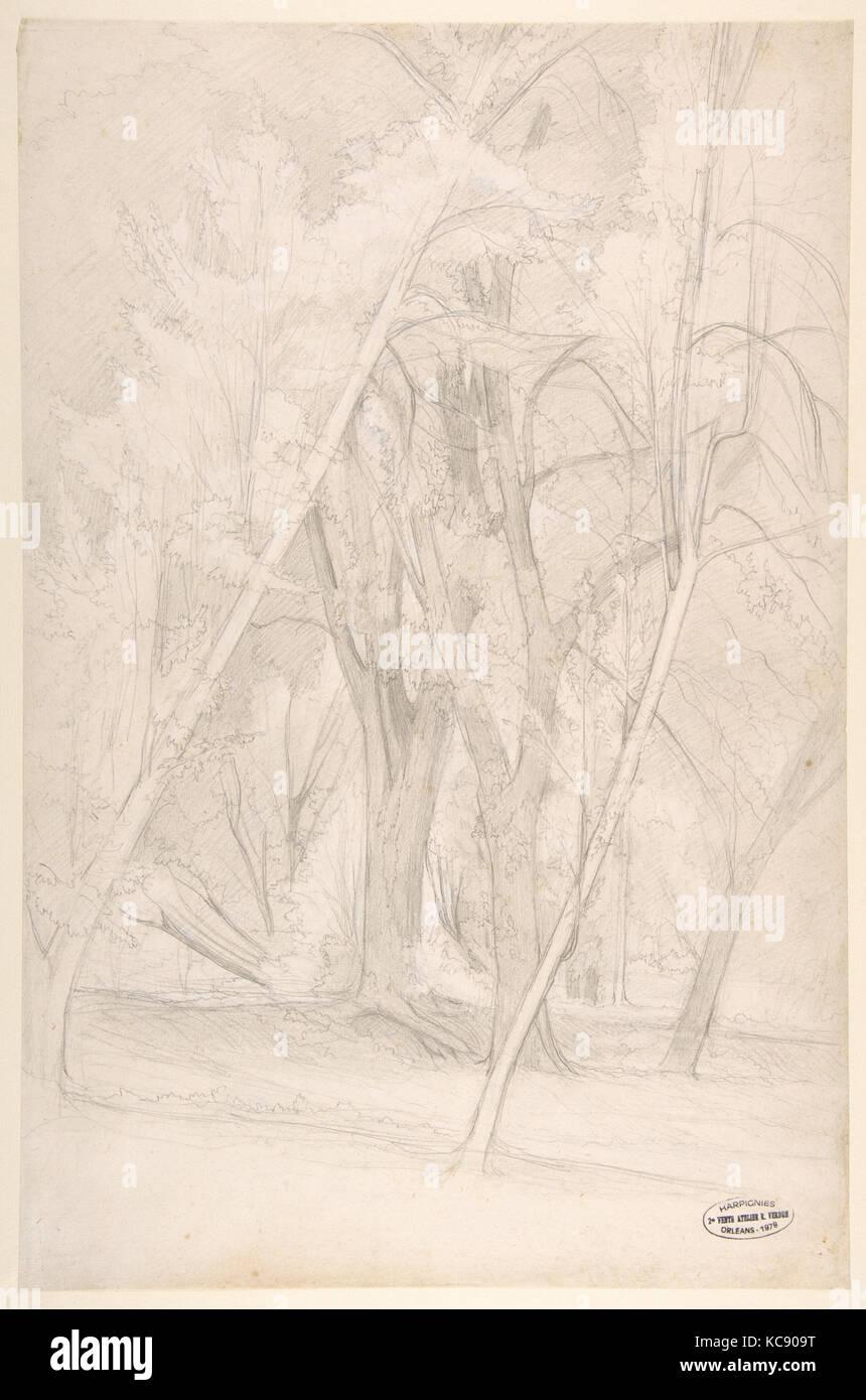 Forest Interior, Henri-Joseph Harpignies, 1835–1916 - Stock Image