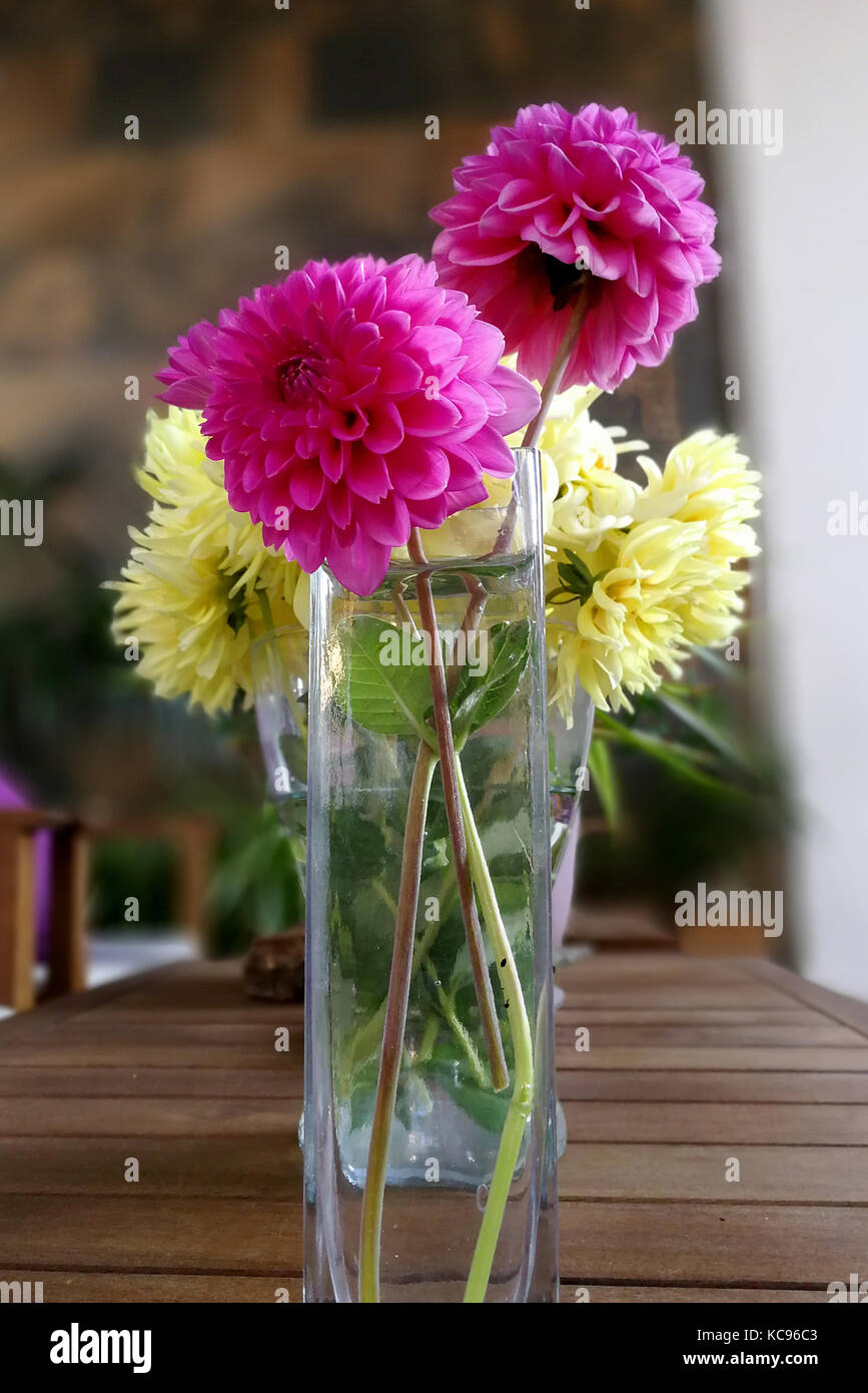 trhee pink dahlias stylized bouquet - Stock Image