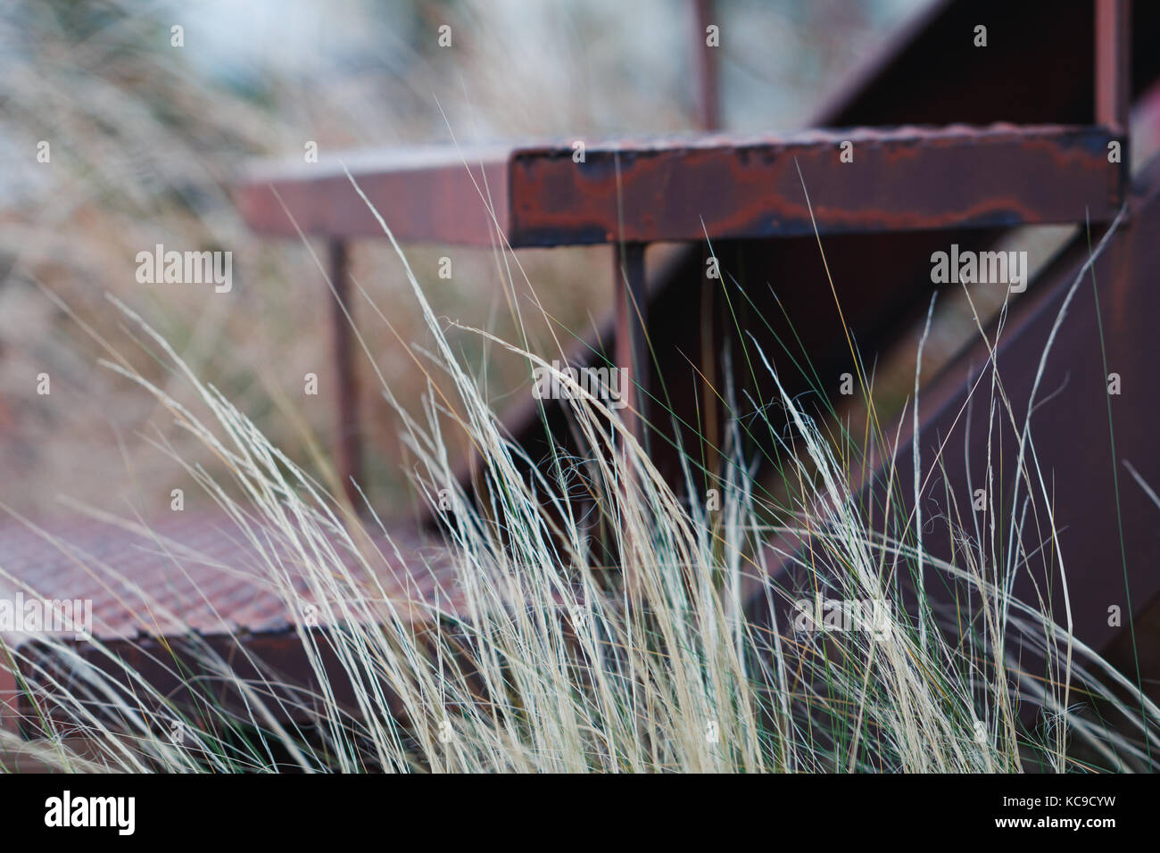 Stairs of an abandoned house, overgrown with grass. The concept of desolation and abandonment. - Stock Image