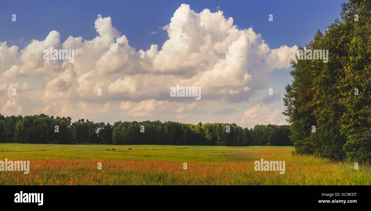 Hayfield, countryside of Brandenburg - Stock Image