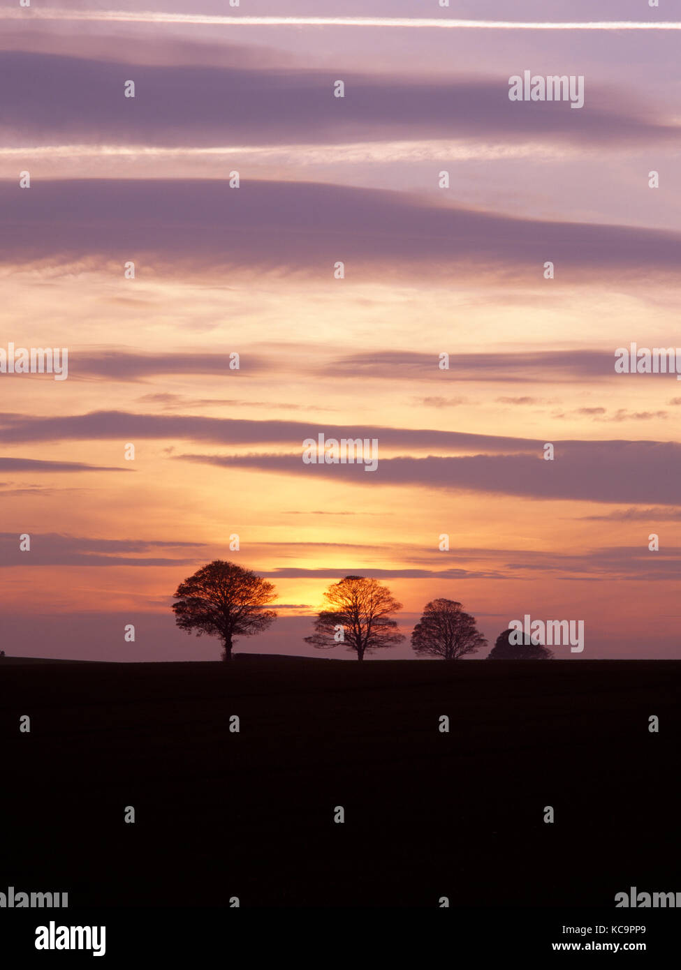 Ampleforth, North Yorkshire, England. Bare trees and bands of altocumulus clouds backlit at sunset. - Stock Image