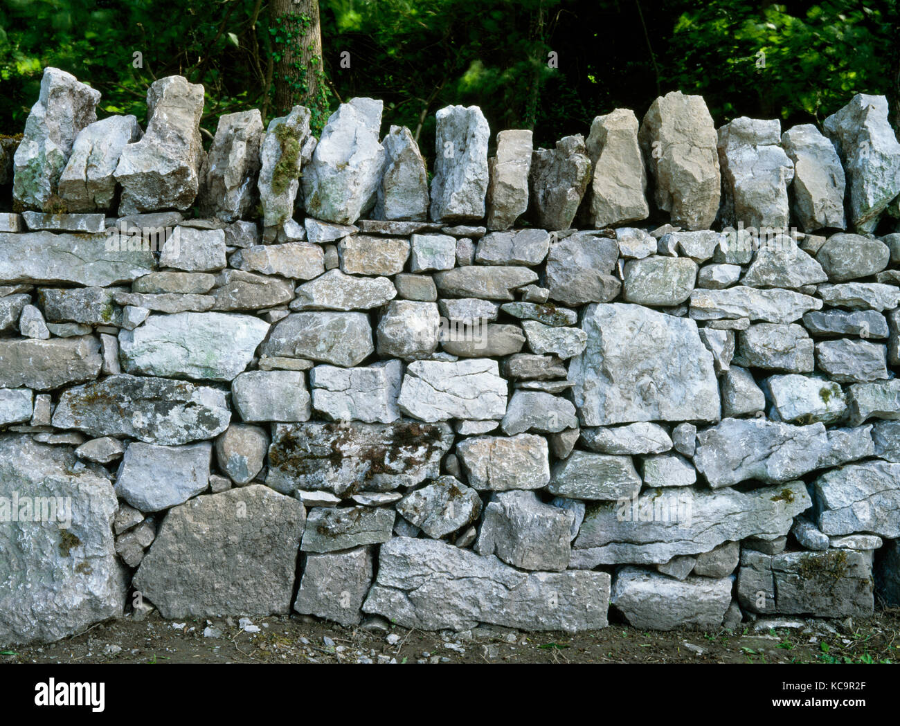 Drystone wall, Loggerheads Country Park, Denbighshire, North Wales, UK. Rebuilt by Richard Jones. Locally sourced Stock Photo