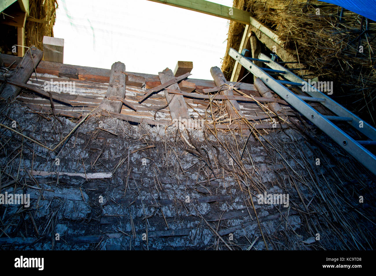 Repair and re-thatching of the roof at The Plough pub, Church Street, West Hanney, Wantage, Oxfordshire, UK - Stock Image