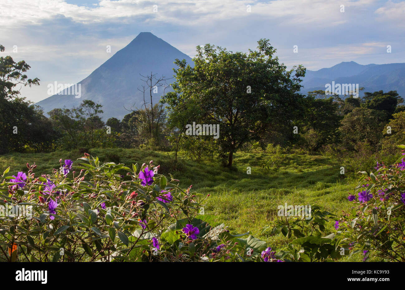 Arenal Volcano In Costa Rica With Tropical Flowers
