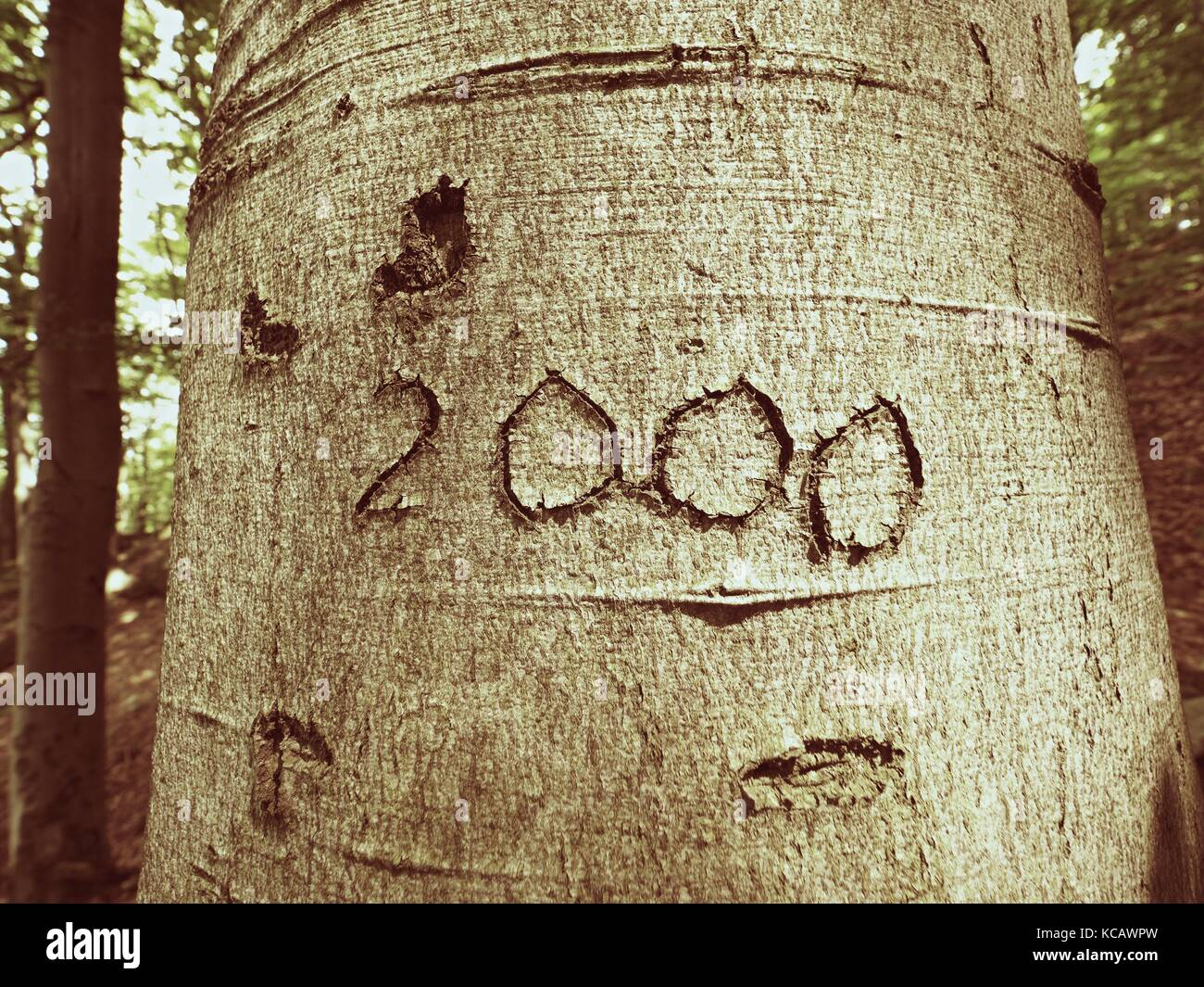 Number two thousand. Knife carving on beech tree bark. Tree vandalism in a forest park - Stock Image