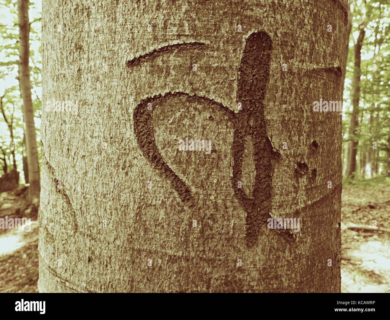 Chinese or Japanese letter. Knife carving on beech tree bark. Tree vandalism in a forest park - Stock Image