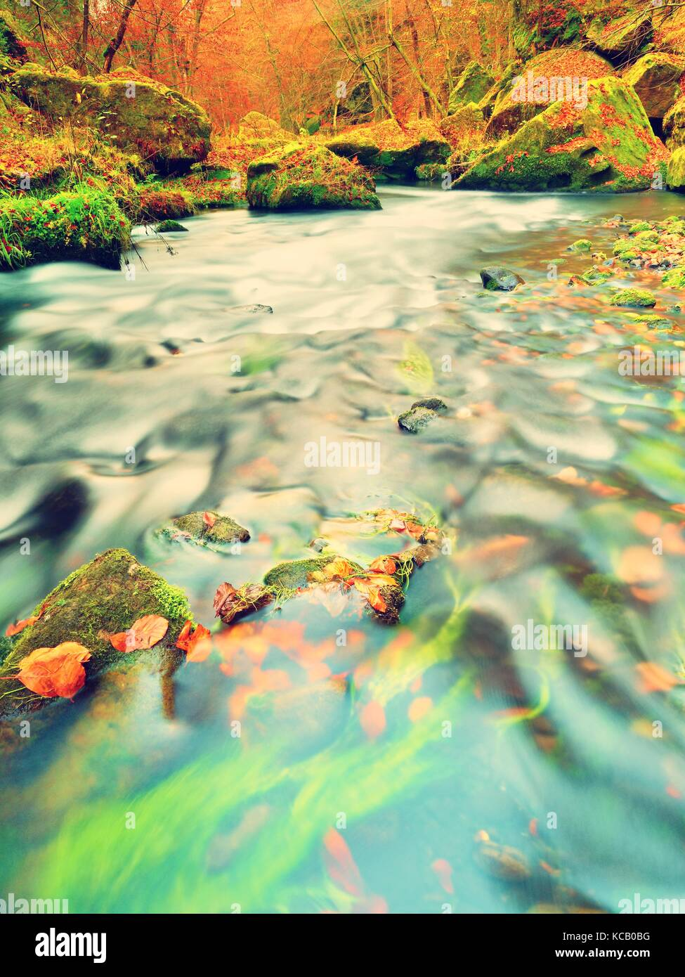 Fall in nature. Colors of autumn mountain river. Colorful gravel with leaves, leaves trees bended above river. - Stock Image