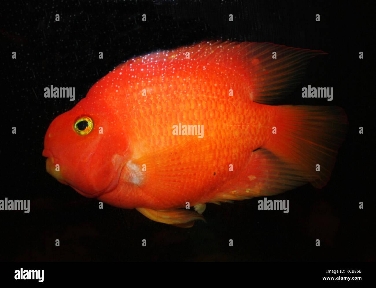 Fish Gills Stock Photos & Fish Gills Stock Images - Alamy