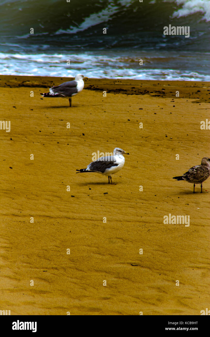 Bird in search of food - Stock Image