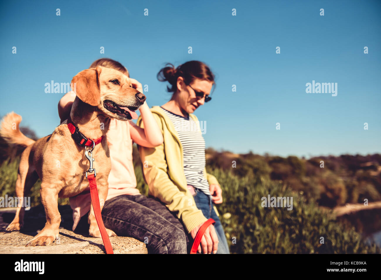 Small yellow dog and family enjoying together outdoors - Stock Image