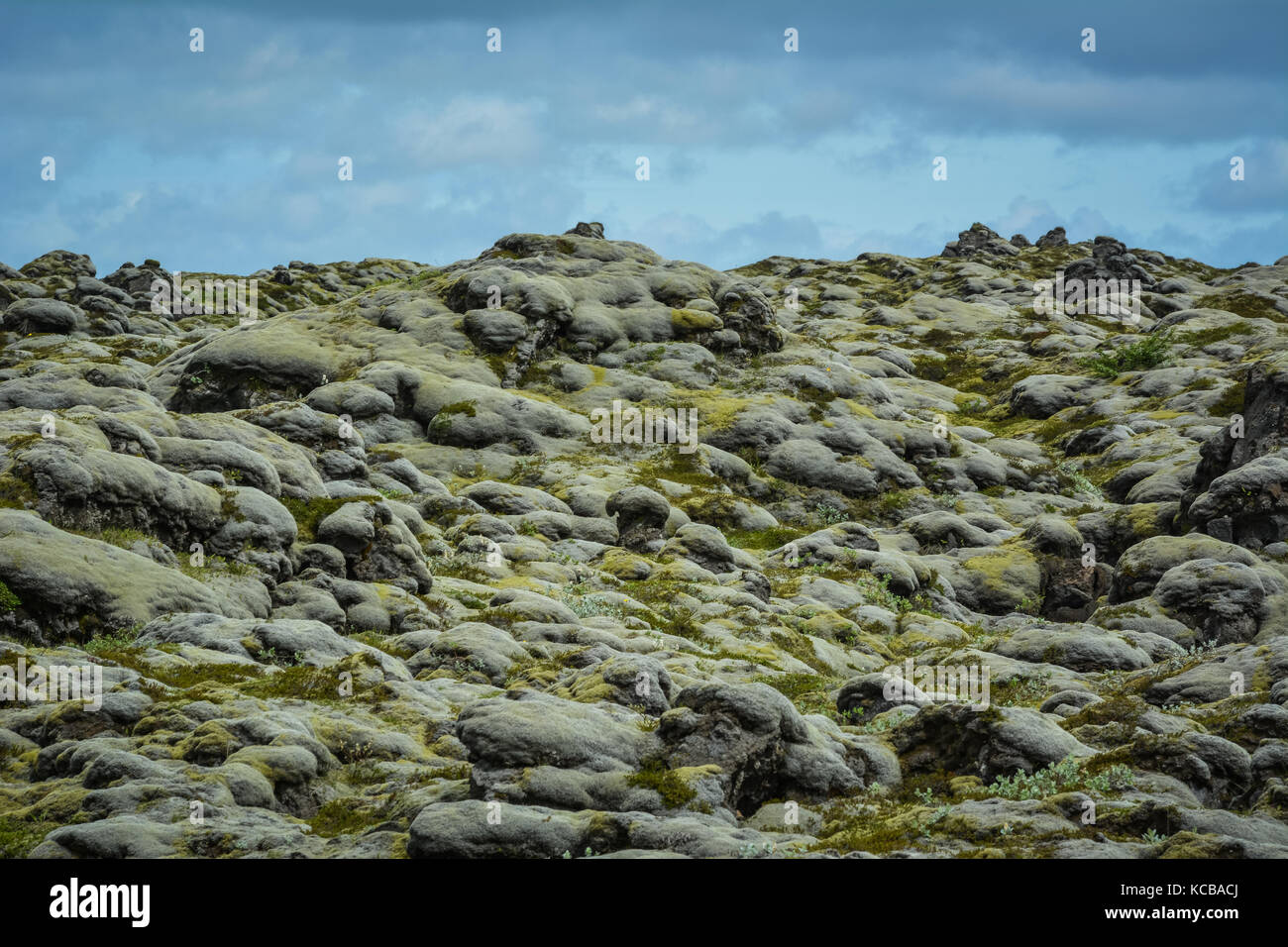 Lava field covered by moss with blue sky in Iceland - Stock Image