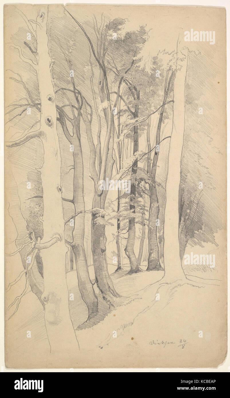 Trees near Diessen, Carl Maria Nicolaus Hummel, mid 19th–early 20th century - Stock Image