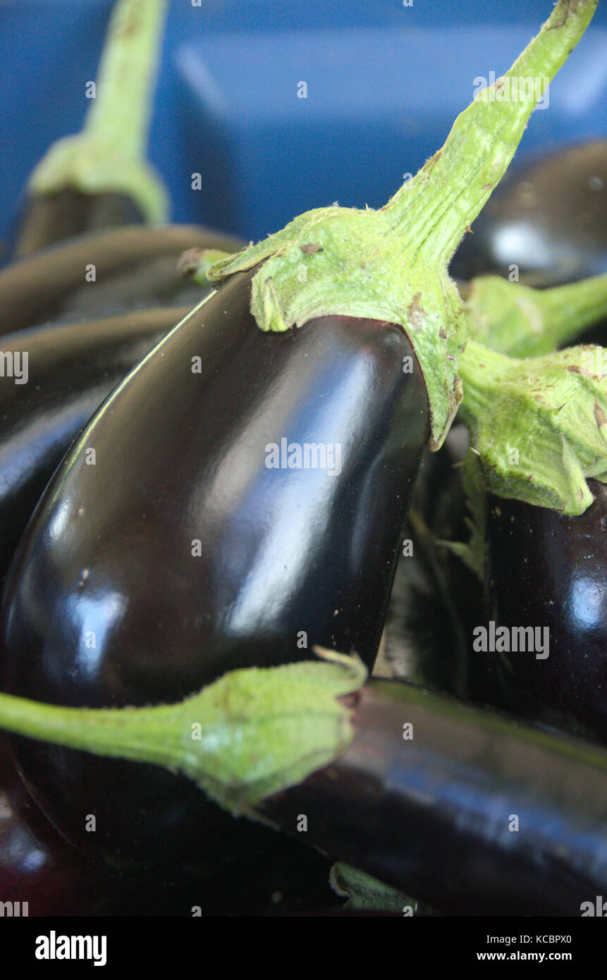 Eggplant Black Purple Shiny Skin Farmers Market Fresh Organic Vegetable - Stock Image