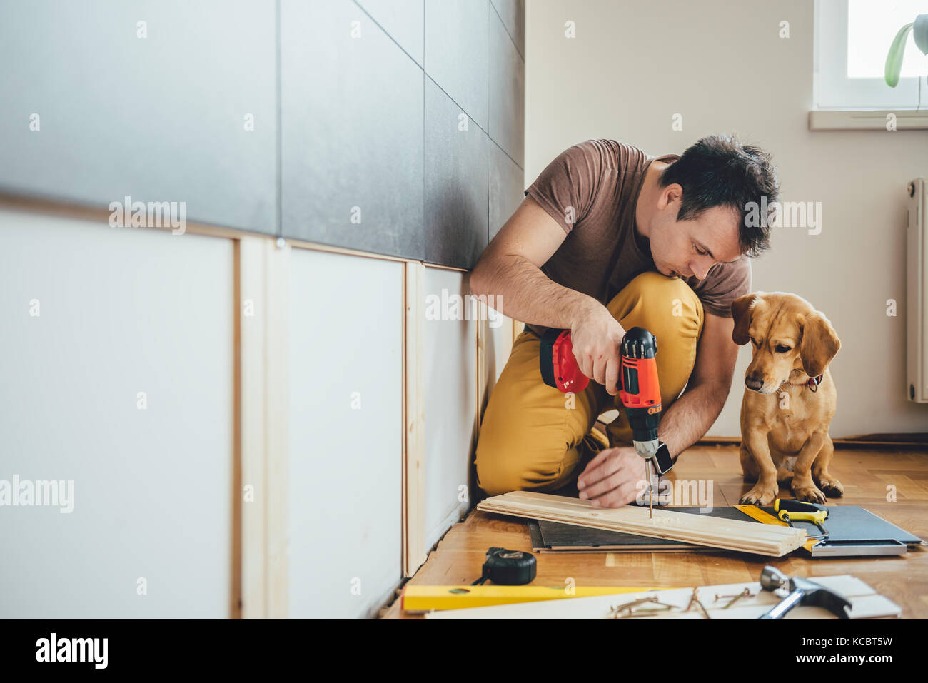 Man doing renovation work at home together with his small yellow dog - Stock Image