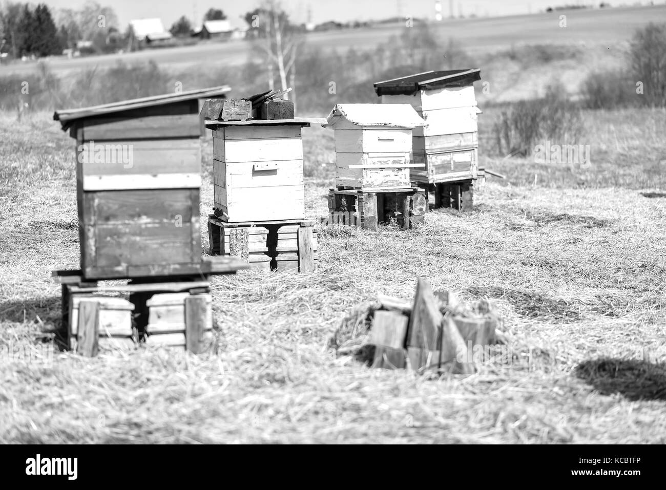 Bee hive standing in field  - Stock Image