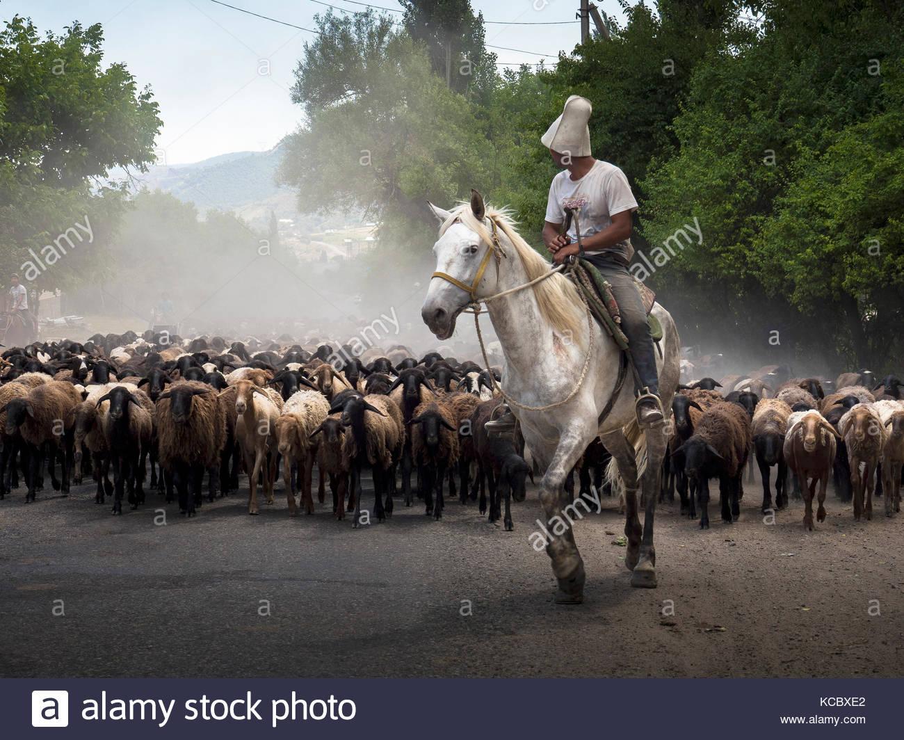 Rider and flocks of sheep, Arslanbob, Kyrgyzstan - Stock Image