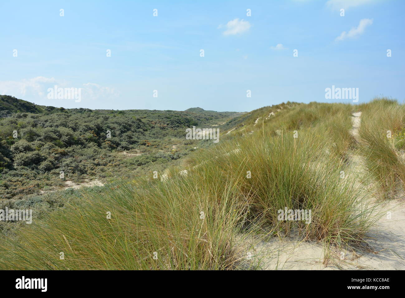 Scenery behind the sandy dunes on the North Sea coast in the Netherlands on the island Schouwen-Duiveland Stock Photo