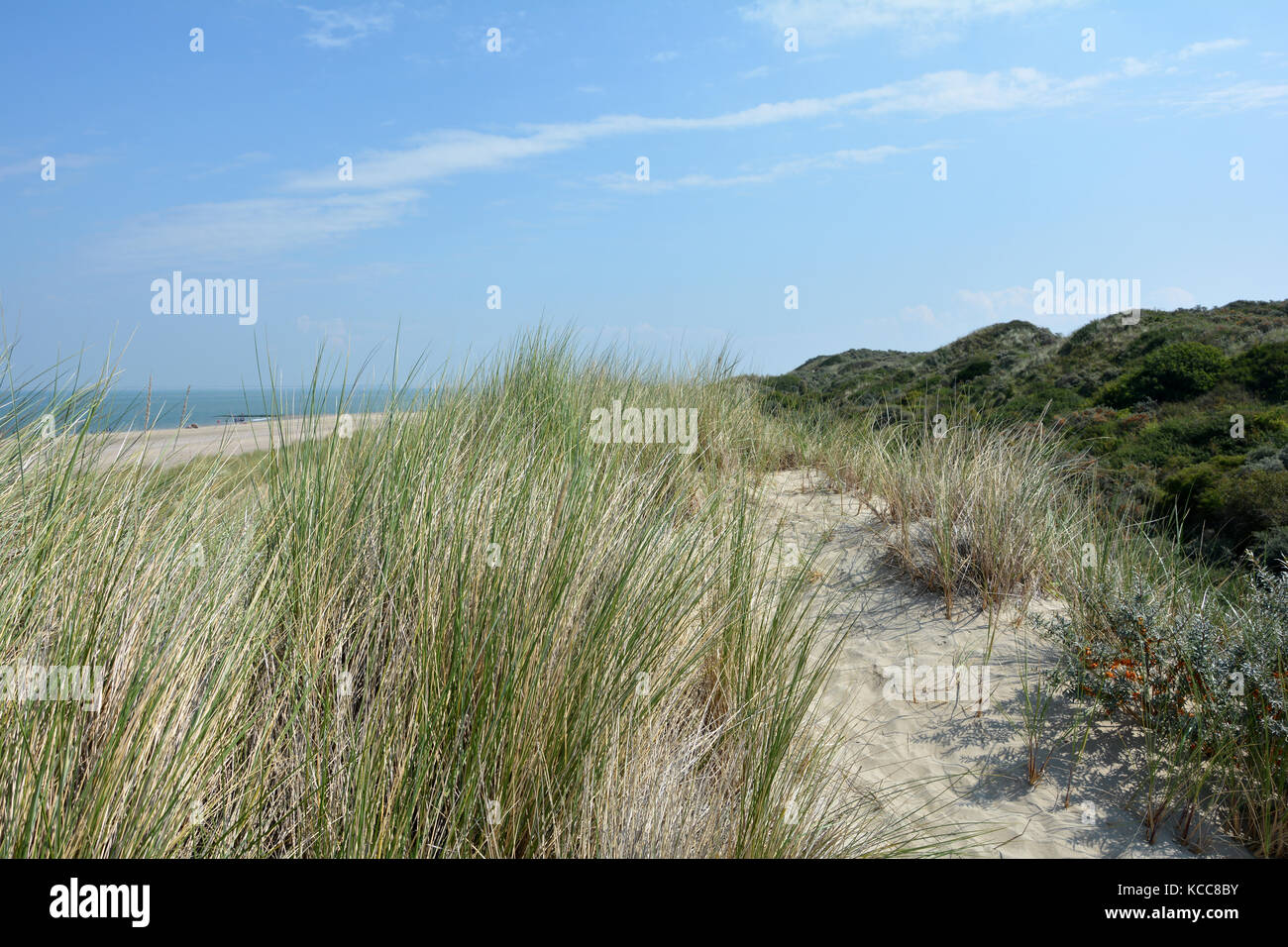Scenery behind the sandy dunes on the North Sea coast in the Netherlands on the island Schouwen-Duiveland - Stock Image