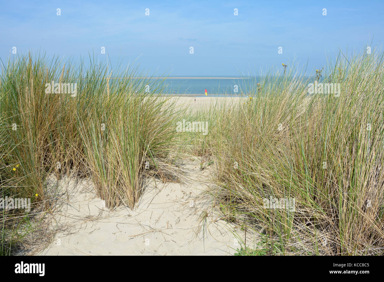 Look by the beach oat in the dunes to the North Sea - Stock Image