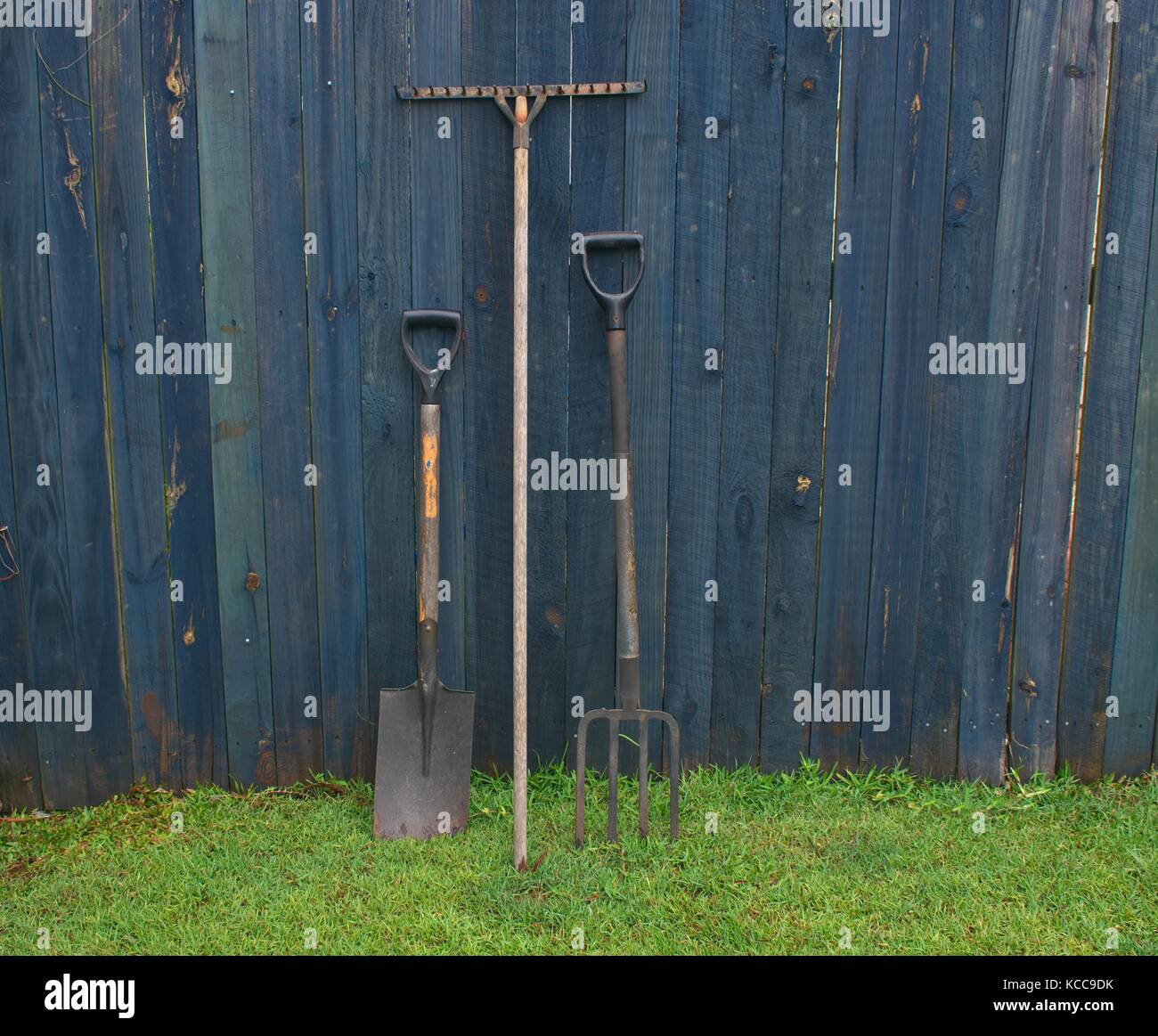 Gardening tools standing in grass against a blue fence - Stock Image