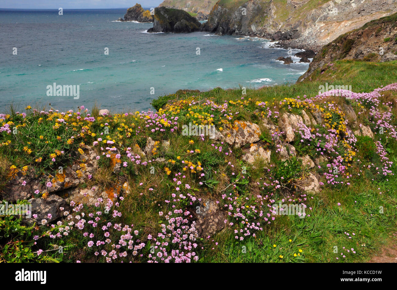 Spring Flower Cover A Granite Stone Wall On The Coast Path Of The