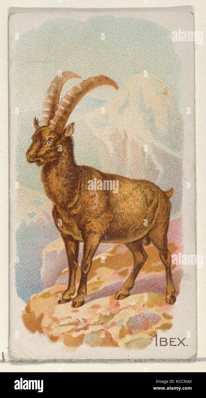 Ibex, from the Quadrupeds series (N21) for Allen & Ginter Cigarettes, 1890 - Stock Image