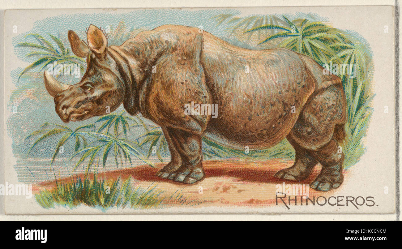 Rhinoceros, from the Quadrupeds series (N21) for Allen & Ginter Cigarettes, 1890 - Stock Image