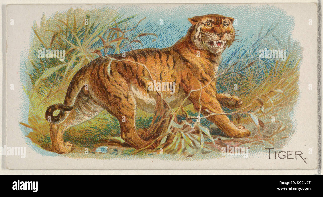 Tiger, from the Quadrupeds series (N21) for Allen & Ginter Cigarettes, 1890 - Stock Image