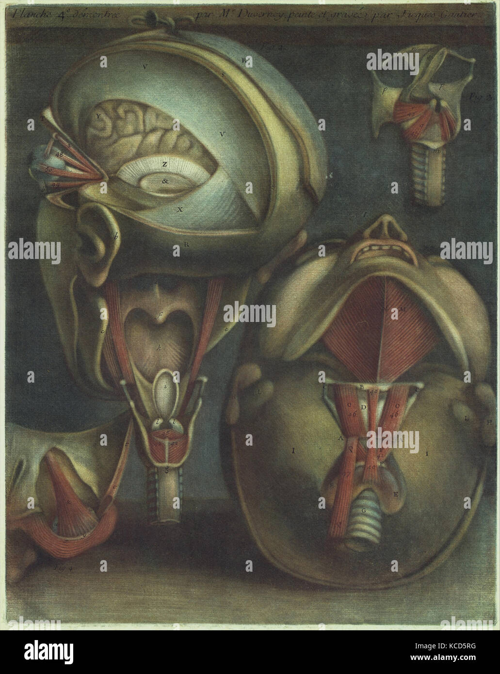 Two Views of the Head (plate 4), in Myologie Complette en Couleur et Grandeur Naturelle, Jacques Fabien Gautier Stock Photo